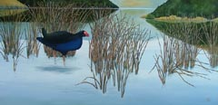 Pukeko at Barry's Bay